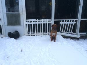 Snow, Desmond
